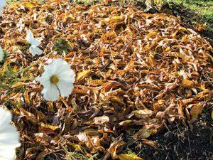 feuilles mortes sol nu