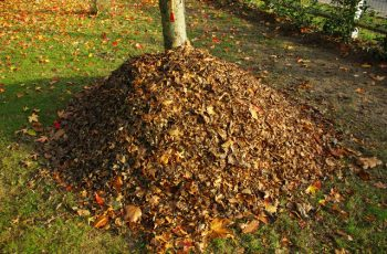 feuilles mortes terreau
